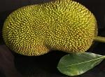 jackfruit-zenmoon
