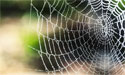 spiders-tune-in-to-web-s-music-zenmoon